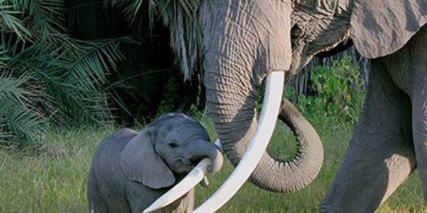 @Protect_Wldlife 11h11 hours ago TweetSave  Please Sign & RT: Help Stop the Export of Zimbabwe's Baby #Elephants!! http://www.thepetitionsite.com/tell-a-friend/14300237#bbtw=580505116 … via @action4ifaw