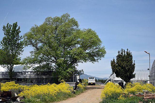日野 春 ハーブ ガーデン