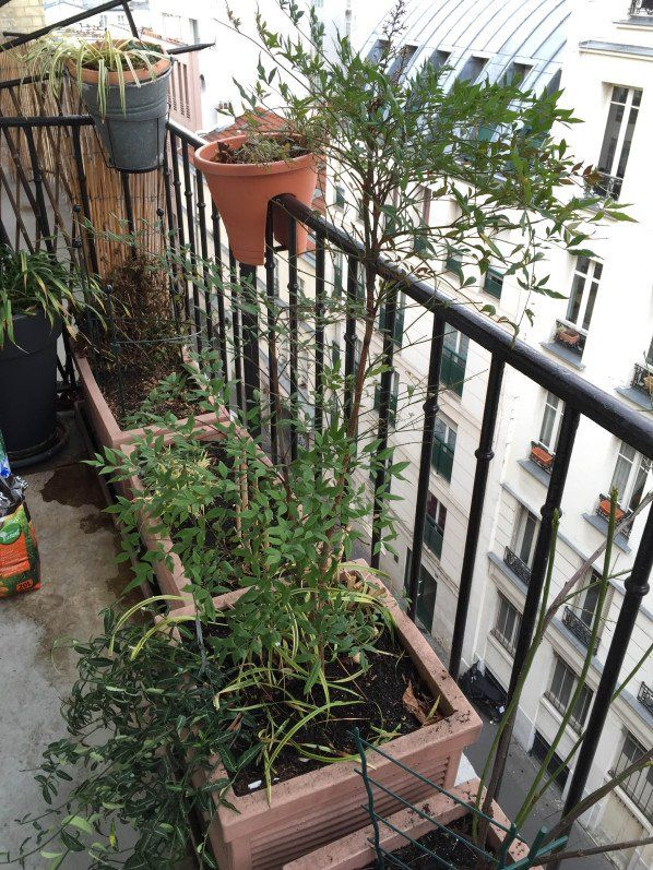 Nouvelle saison jardinière sur mon #balcon http://www.pariscotejardin.fr/2015/03/nouvelle-saison-jardiniere-sur-mon-balcon/