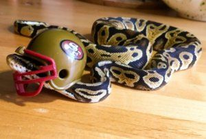 Best option for small pet snake