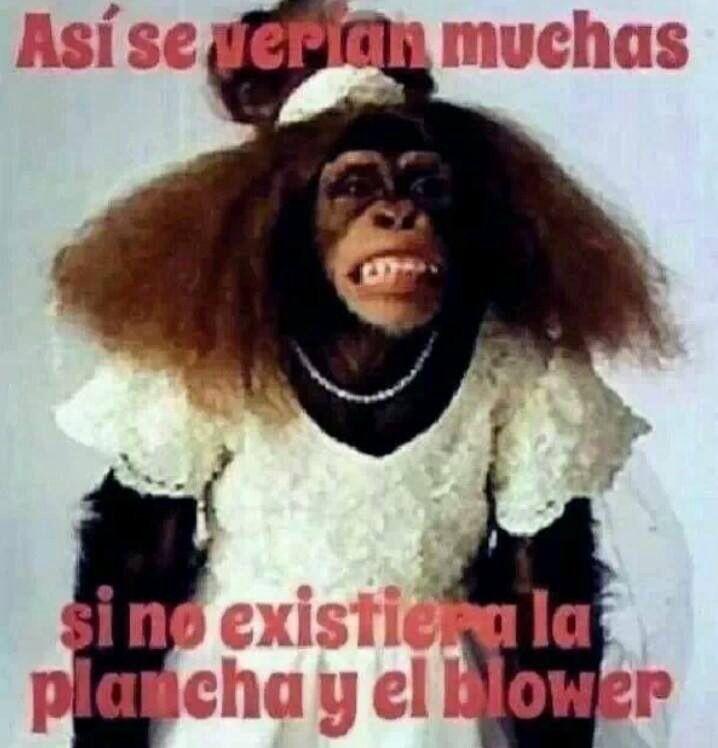 Funny Spanish Memes Monkeys Funny Good Morning Funny