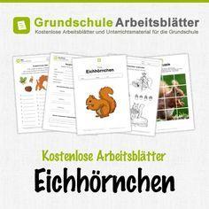 Kostenlose Arbeitsblätter und Unterrichtsmaterial für den Sachunterricht zum Thema Eichhörnchen in der Grundschule.