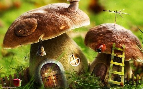 A little fairy's home...too cute!   (and don't think I didn't notice that spider to the left of the big house) ugh!
