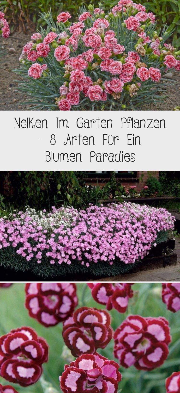 Nelken Im Garten Pflanzen 8 Arten Fur Ein Blumen Paradies Outdoor Decor Outdoor Tango