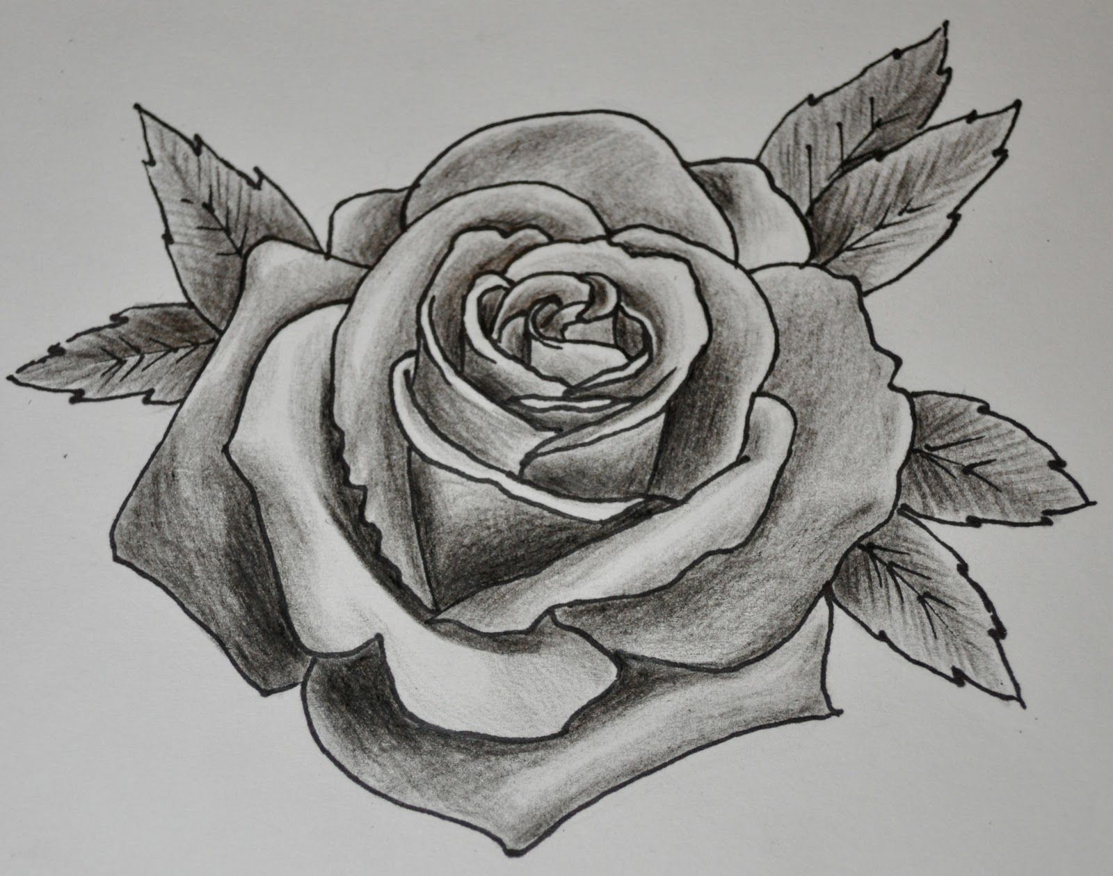 Line Drawing Of Rose Plant : Tattoo drawing rose art work drawings