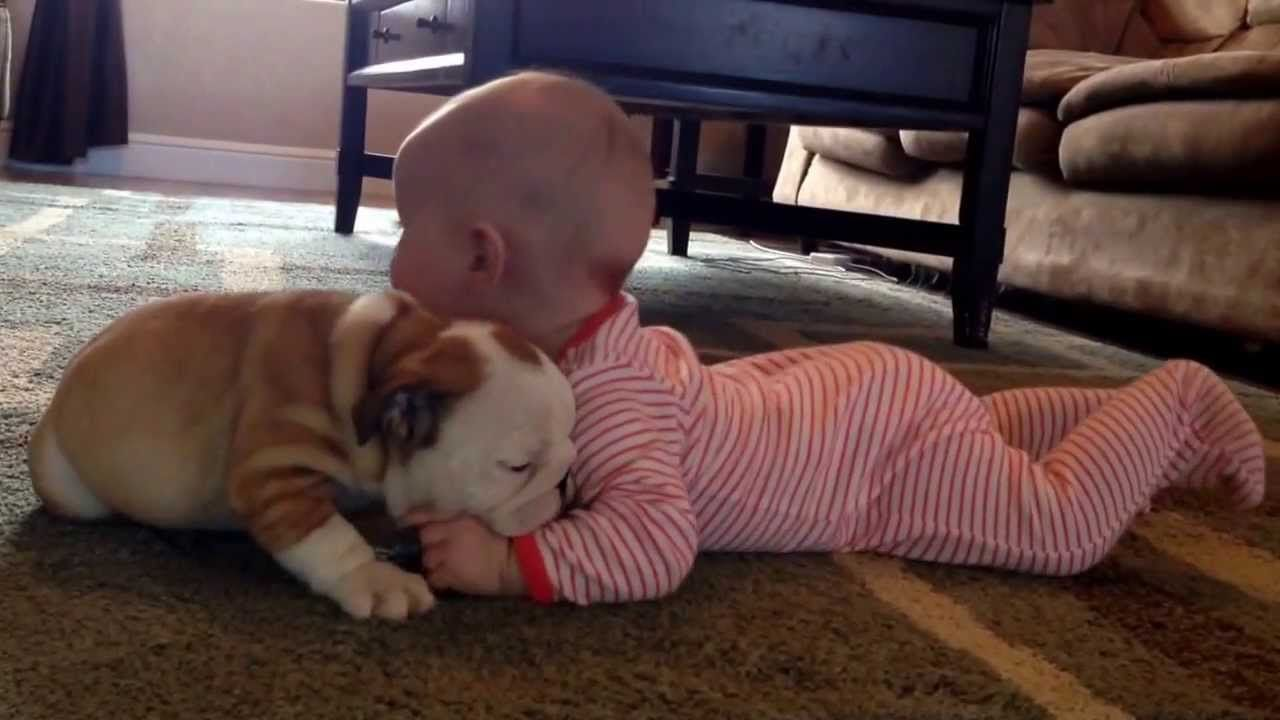 Bulldog Puppy Kissing A Baby Will Make Your Heart Melt Cute