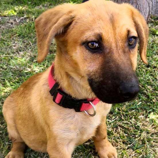 Adopt A Pet Pet Adoption Dog Adoption Animals