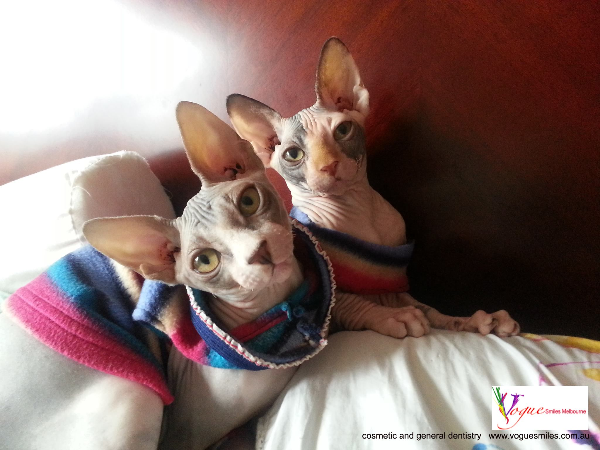 Zucky And Zooky My 4 Months Old Sphynx Kitten In Bed Kittens In Costumes Hairless Cat Cute Cats