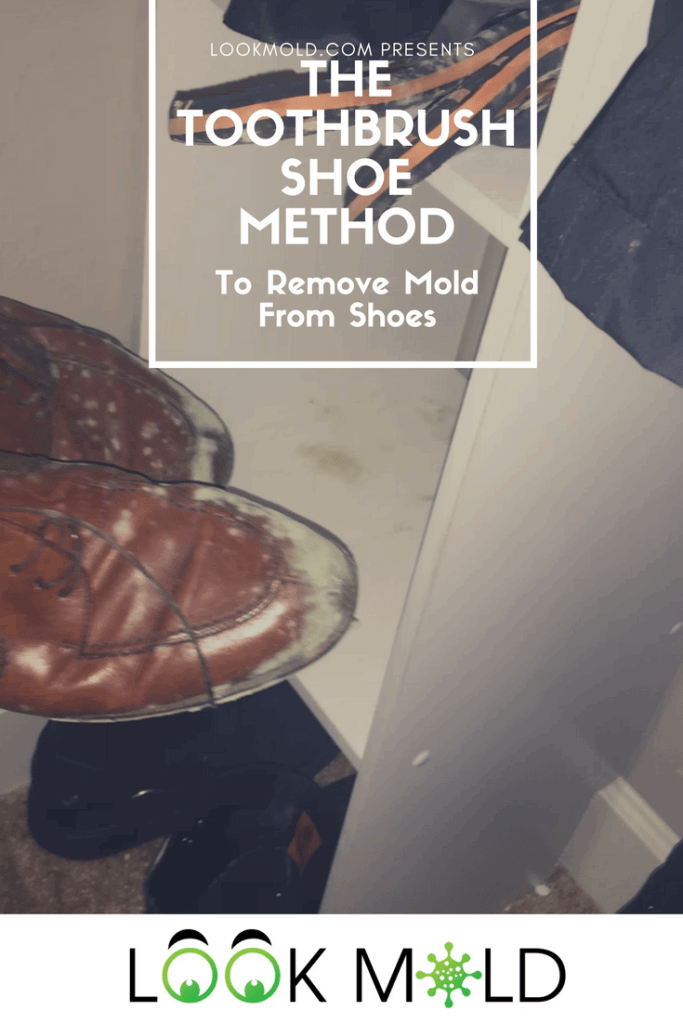 How To Get Mold Smell Out Of Clothes >> How To Remove Mold From Clothes For The Home Mold On