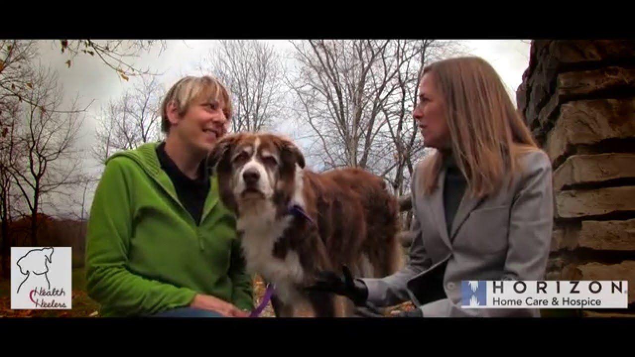 Horizon health heelers therapy animals 4 of 8