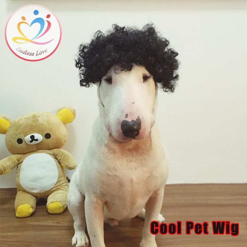 f30cf130d3 Curly Dog Wig. When you wear a bad wigs and you look like an absolute fool.  Hidden agendas pfffffft.... get your own life people