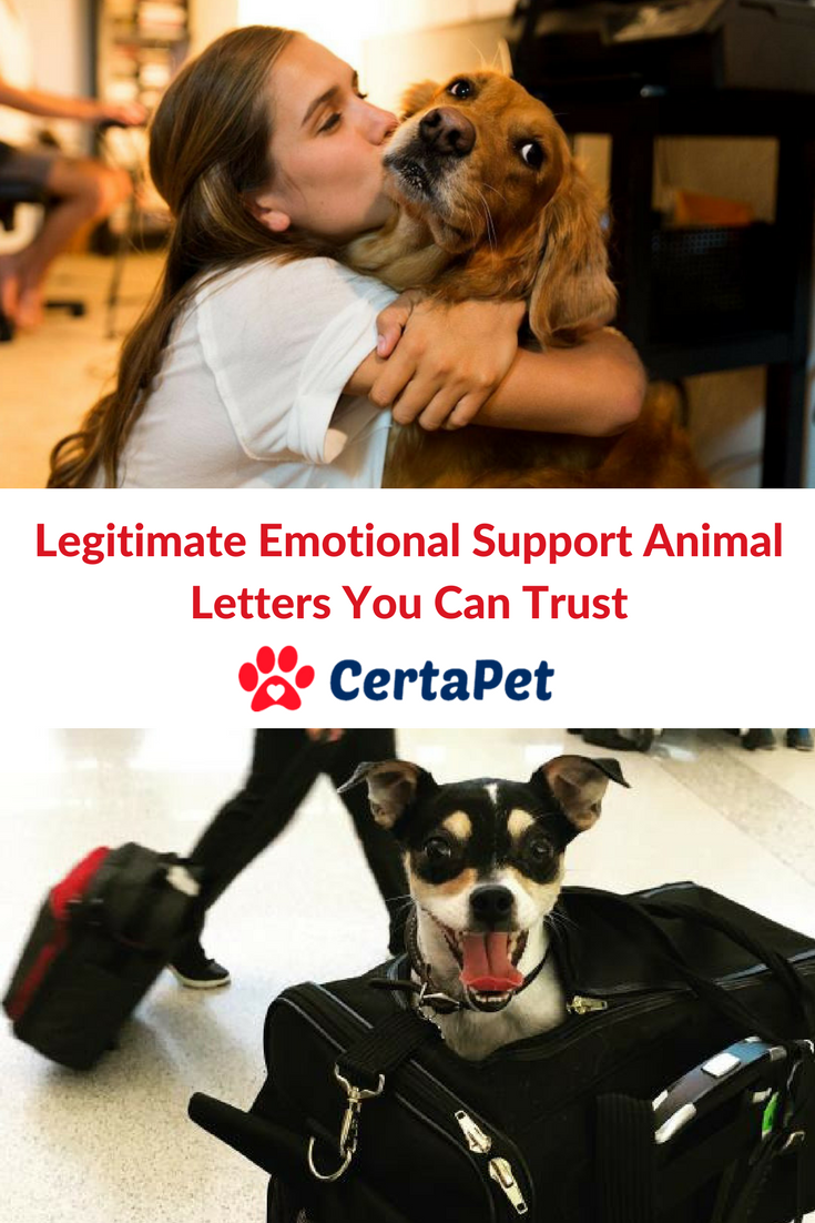 Good Candidate Emotional support animal, Animal letters
