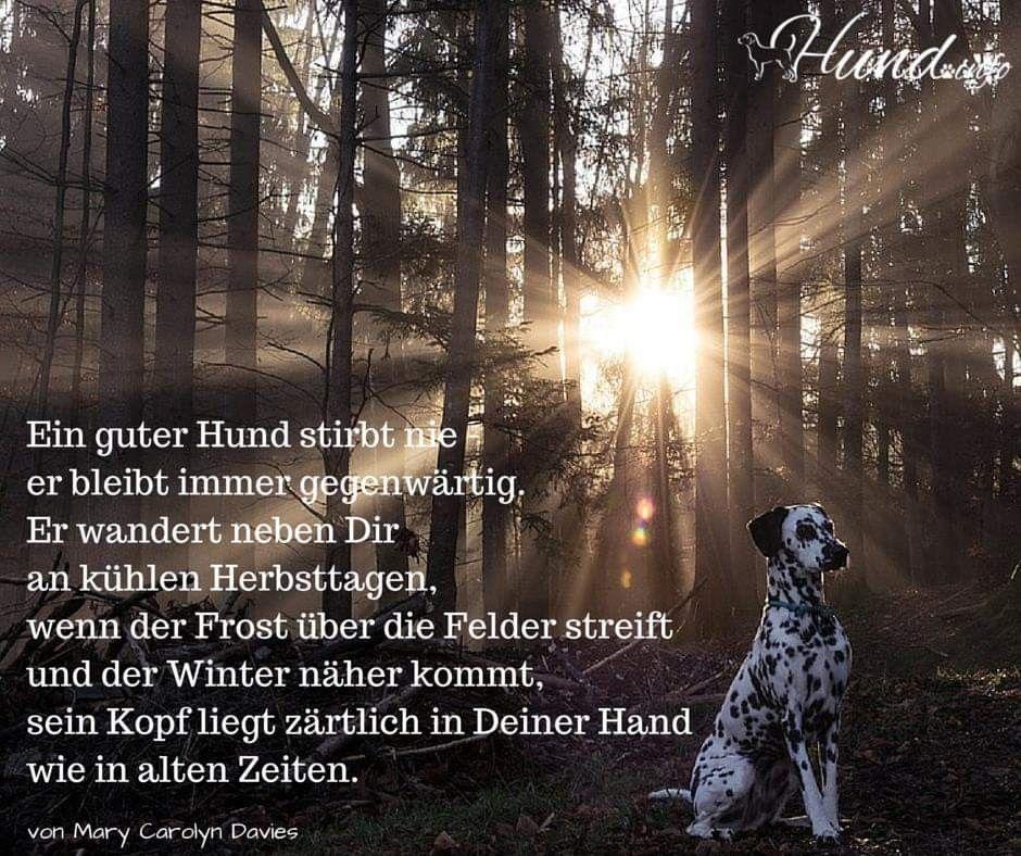 Pin Von Anja Fiedler Auf Hunde Hund Starb Hunde Regenbogenbrucke