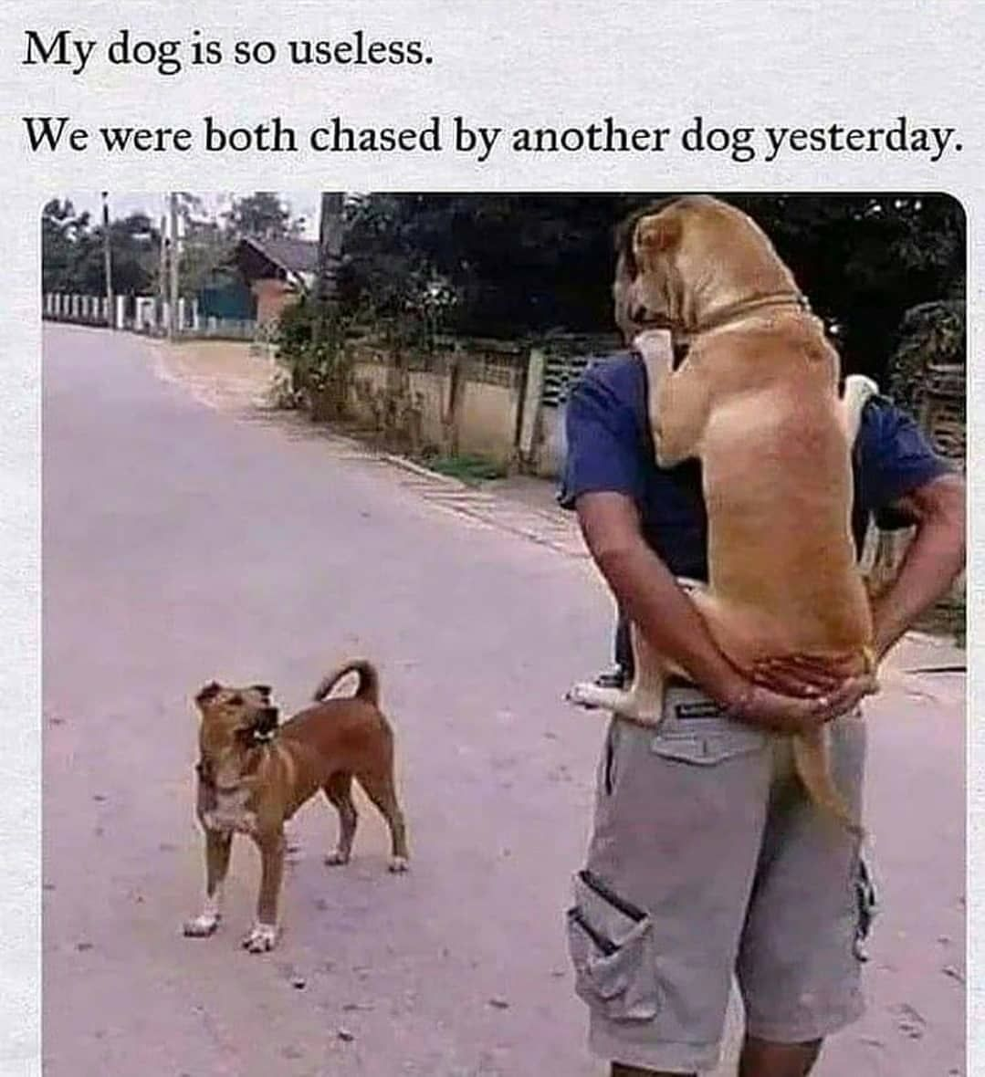 Omg In 2021 Dog Memes Funny Dog Memes Dogs Trust
