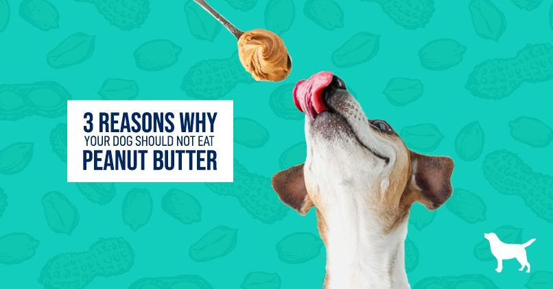 Can Dogs Eat Peanut Butter?   Can dogs