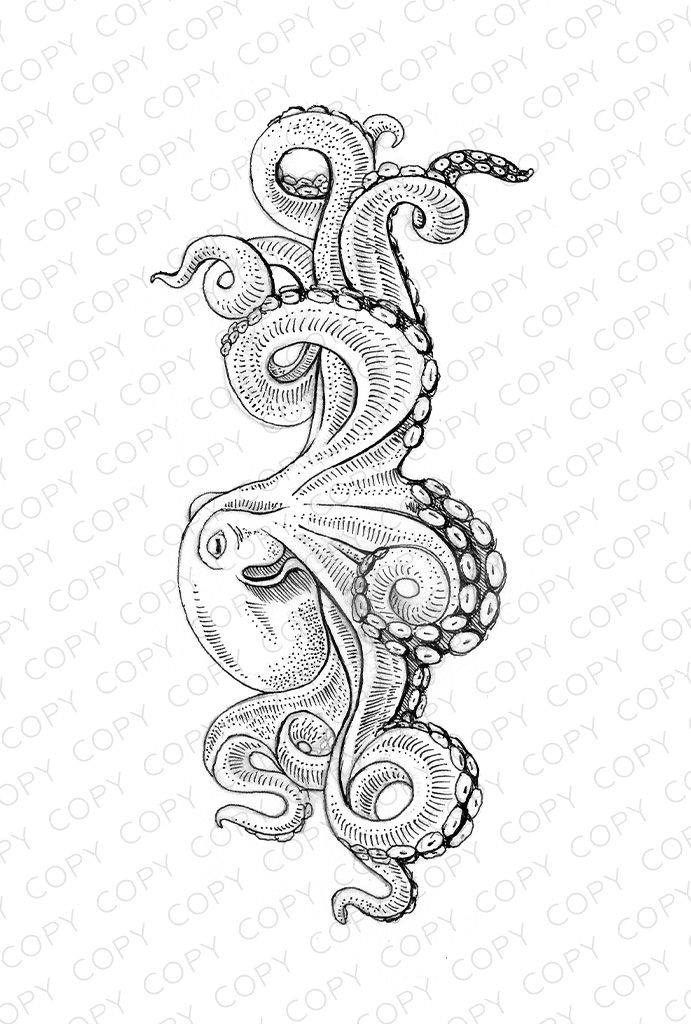 Octopus Sketch Drawing Illustration for Download coloring
