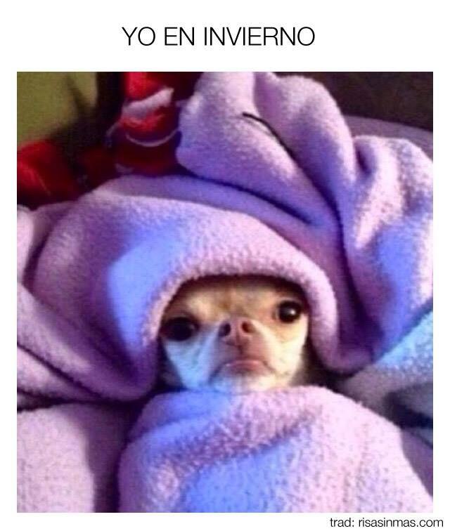 Meme Generator Memes De Frio Animales Bonitos Humor De Perros