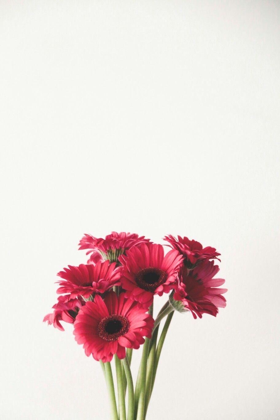 Abbigrace Co Simplified Flowers Dengan Gambar Poster Bunga Bunga Daisy Bunga