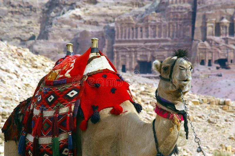 Camel in petra jordan. Symbol of africa and the middle east ,transport, travel a , #Sponsored, #africa, #middle, #east, #Symbol, #Camel #ad #petrajordan Camel in petra jordan. Symbol of africa and the middle east ,transport, travel a , #Sponsored, #africa, #middle, #east, #Symbol, #Camel #ad #petrajordan Camel in petra jordan. Symbol of africa and the middle east ,transport, travel a , #Sponsored, #africa, #middle, #east, #Symbol, #Camel #ad #petrajordan Camel in petra jordan. Symbol of africa a #petrajordan