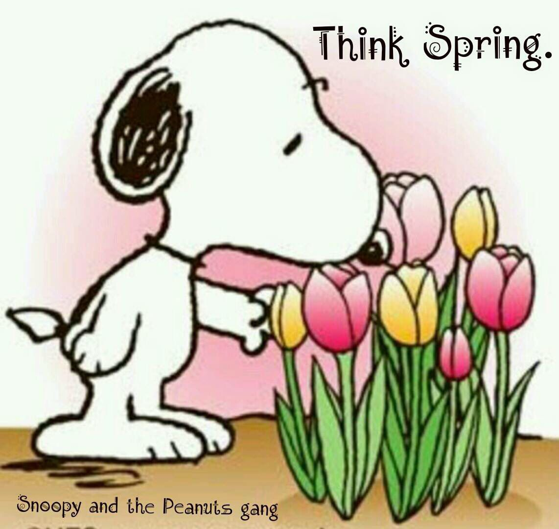 snoopy think spring u2026 pinteres u2026