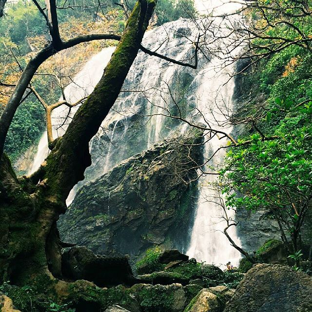 Awesome👍  #waterfalls #waterfall #water #stream #current #nature #earth #lovenature #naturephotography #photograph #photography #photo #arty #art #travel #tourism #planet #destination #Thailand #amazing #amazingthailand #awesome #place #beautiful #wonderful #fresh #fun arty #photograph #earth #amazing #awesome #stream #destination #photo #amazingthailand #tourism #nature #beautiful #water #place #current #fresh #wonderful #fun #photography #waterfalls #naturephotography #travel #planet…