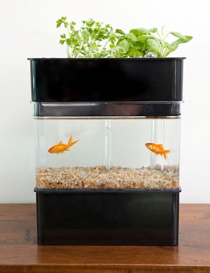 Aquaponicals are attractive small scale aquaponics for Aquaponics fish tank