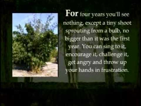 The Inspiring Story Of The Bamboo Tree Is Much Like Life Itself