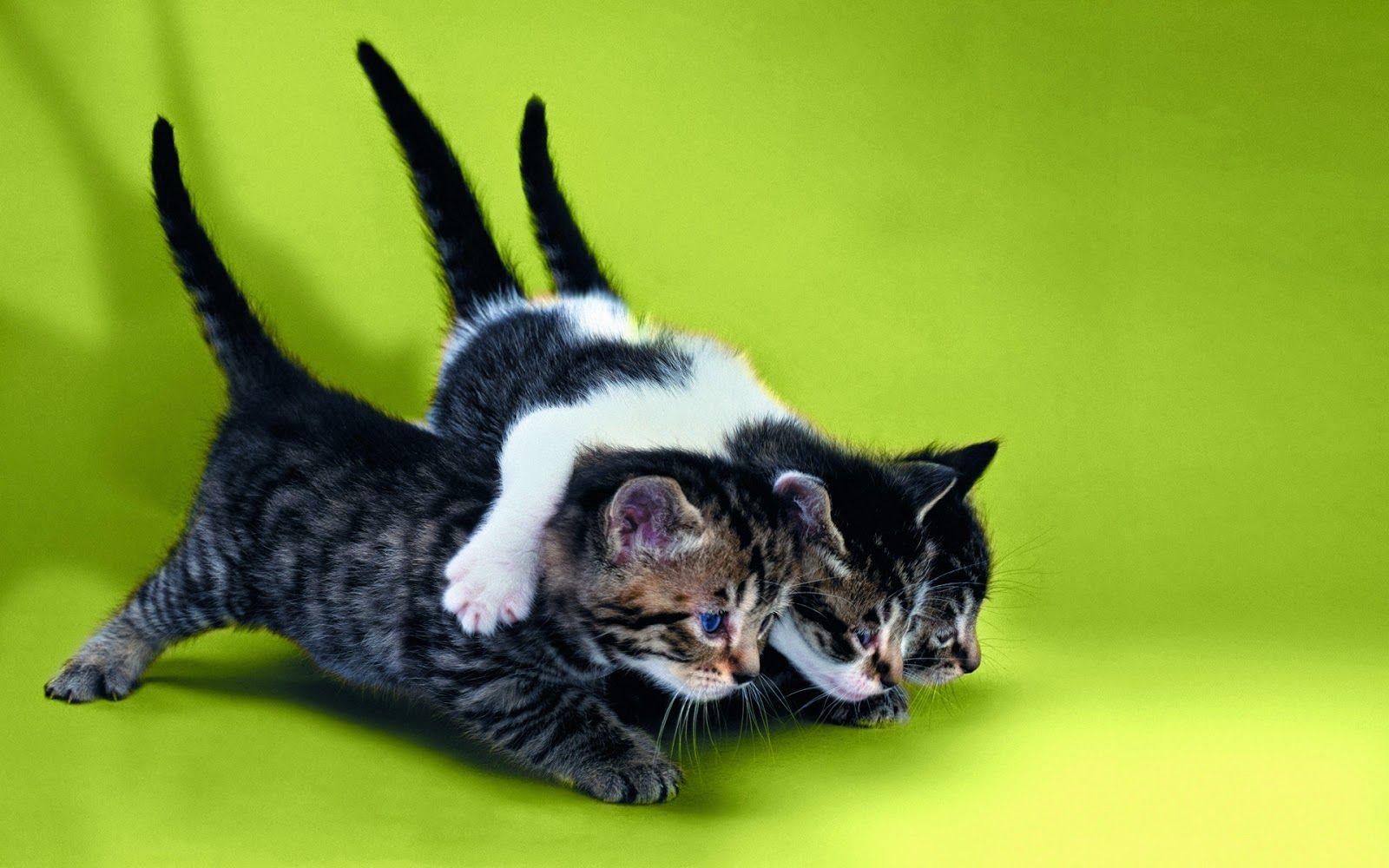 Katzenbabys Lustig Kleine Katzen Lustige Katzen Katzenbabys Katzenkinder Katzenkinder Lustige Katzenbilder Katzenbabys Katzen