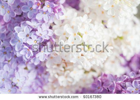 Ook deze afbeelding is als schilderij te bestellen bij Magneetschilderij.nl. Shutterstockcode 93167380