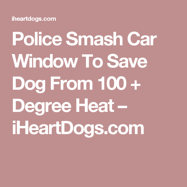 Police Smash Car Window To Save Dog From 100 + Degree Heat – iHeartDogs.com