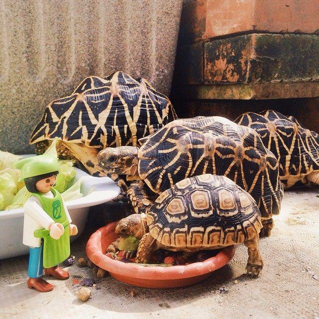 天氣大好,大夥兒全部給我出來泡溫泉,吃好料 #Tortoise #Playmobil