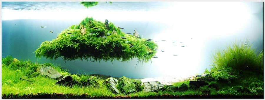 Amano Creates Through Bespoke Aquariums Amazing Beautiful Scenes From  Nature, Miniature Natural Landscapes, Being An Award Winning Aquarist And  Designer.