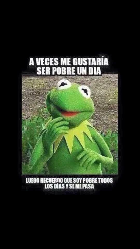 Galeria 28 Frases De La Rana Rene En Donde Nos Comparte Las Cosas Que Nunca Logra Hacer Mexican Funny Memes Funny Memes Mexican Humor