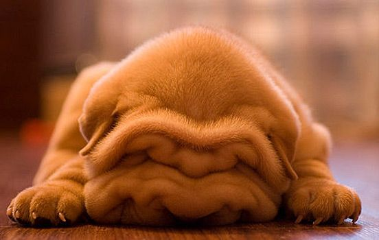 I love this I can hide under my own blanket and sleep. other dogs have to be jealous.