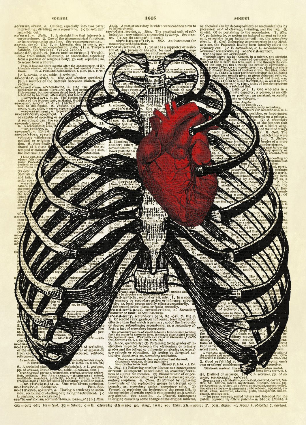 Human Thorax with Human Heart Dictionary Art Print No. 10 Two antique medical illustrations combined to create one amazing image. A human thorax surrounds a red human heart.  Fabulous! YOU WILL RECEIVE A PRINT ONLY. NO FRAME OR MAT IS INCLUDED. This listing is for an amazing image printed on an upcycled vintage dictionary page. We rescue old dictionaries and books from thrift stores and other sources and give them new life by printing vintage, heirloom, old-world style images onto their pages. Y