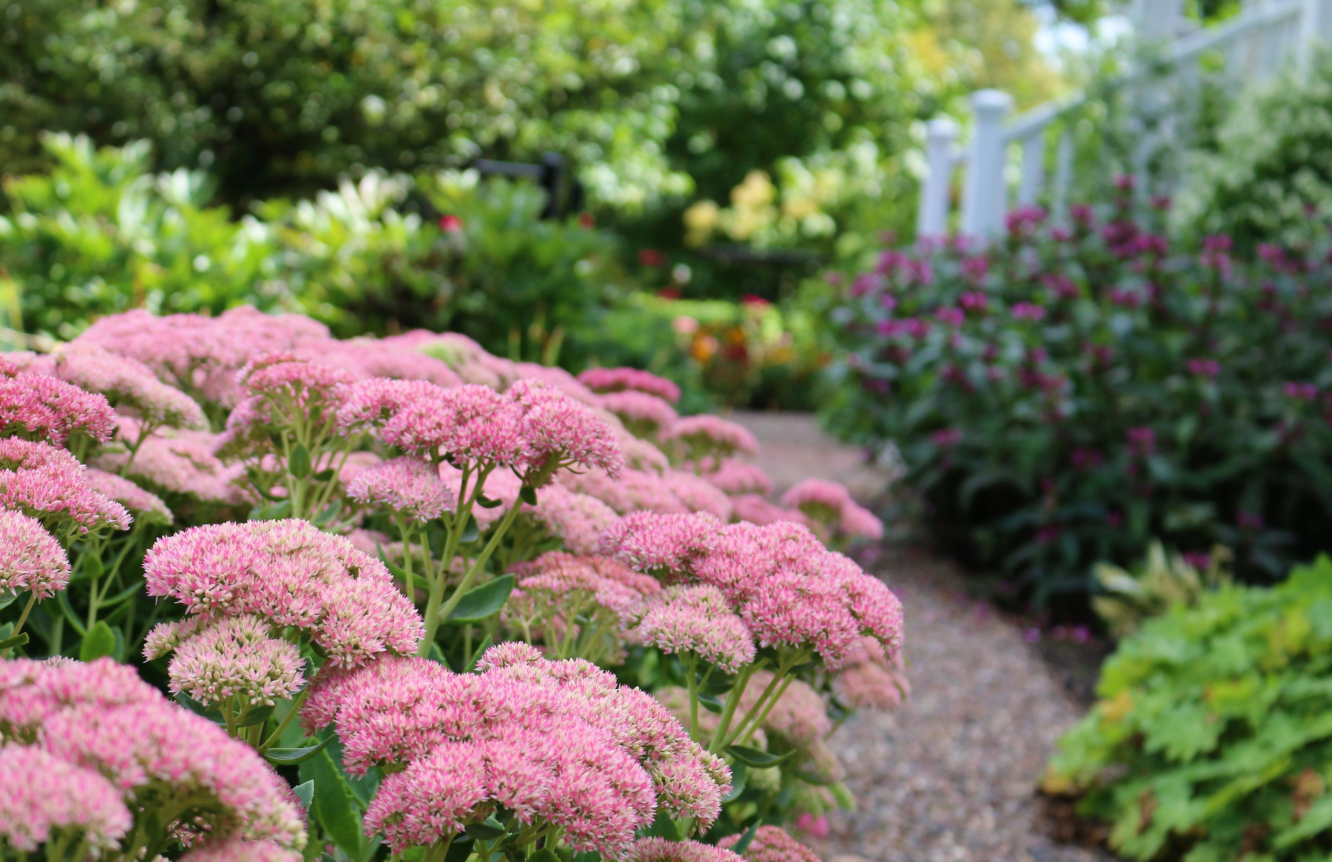 Fall Blooming Perennials Provide Seasonal Color And Texture As They