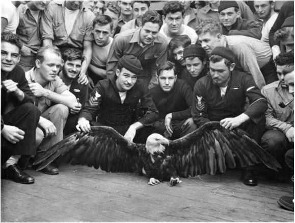 US Navy men pose with an eagle they rescued in the North Pacific, 1944
