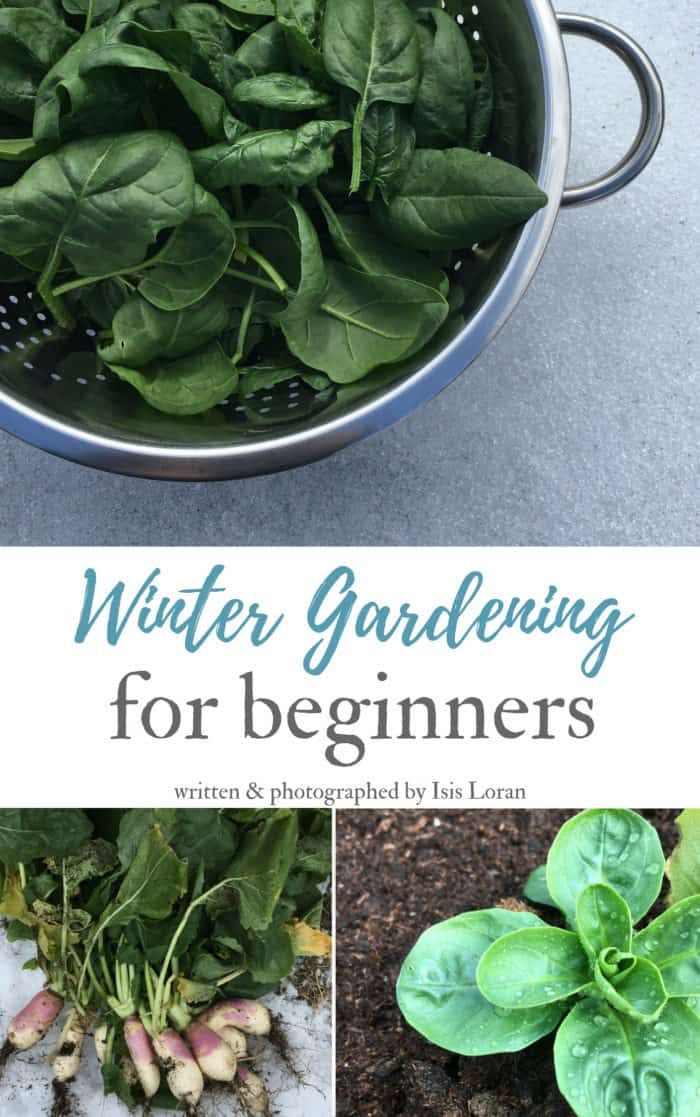 Winter Gardening for Beginners is part of Winter garden Indoor - Are you interested in winter gardening  Do you want to enjoy fresh harvests longer than other gardeners  Have you noticed that certain garden veggies like kale, spinach and carrots get limp with frosts then rebound all perky again  Are you wanting more gardening therapy in a year  Do you struggle growing cool season crops in