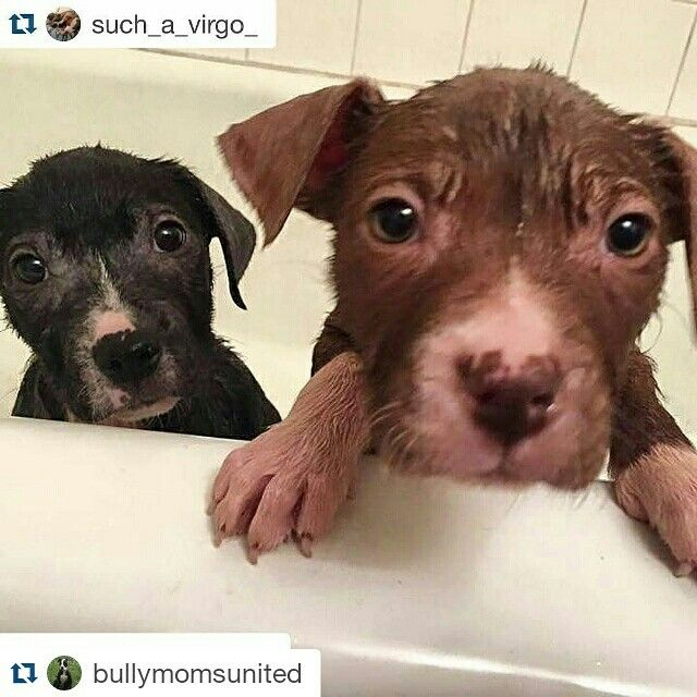 "Urgent TEMPORARY (or long term ) foster needed! ""What?  What do you mean nobody is interested in us??? I'm pretty sure we are definitely cute!  I know we are missing some fur but we are getting so much better and we have peach fuzz coming in and we aren't even contagious anymore!  We are starting to play and act like normal puppies, and we love to give kisses and snuggle!  Did you tell people that?  You must have forgotten to tell them because people love puppies!  There's no way we don't…"