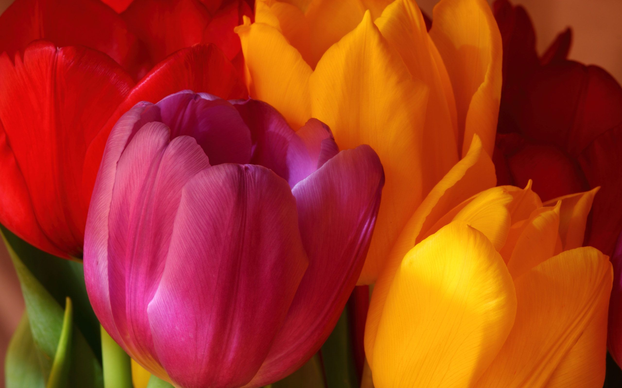Colourful Flowers Nature Tulips Nature Tulips Flowers Tulip Flower Pictures Tulips