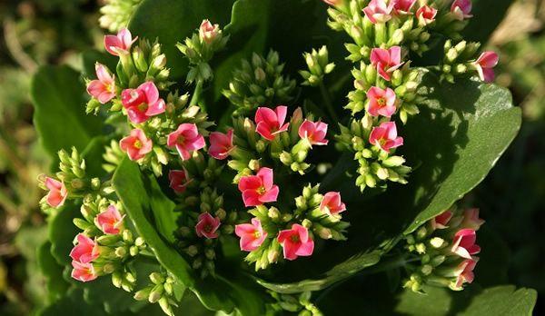 Las mejores flores para interior | EXTERIOR | Pinterest | Mejores ...