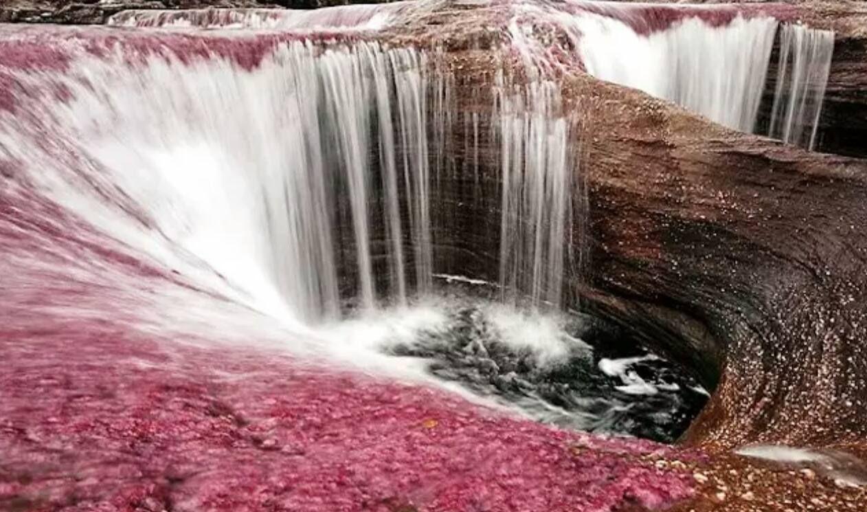 El río Caño Cristales , en Colombia, tiene este particular color debido a una planta local.   AMERICA SUR