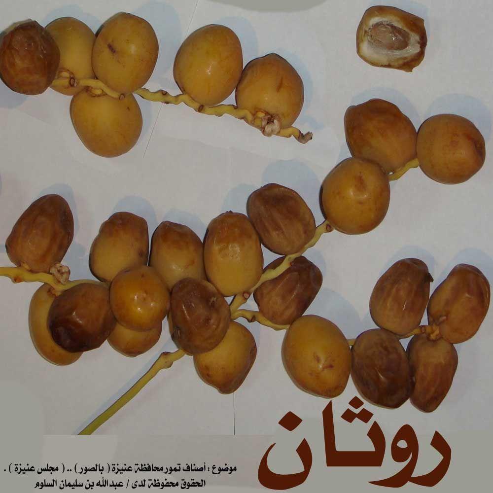 انواع التمور بالصور Grapes Fruit Date Palm