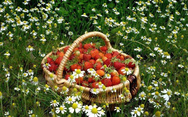 Счастье не имеет рецепта ... Каждый готовит его с ароматом собственных ощущений ..