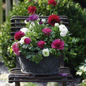 balkonkasten mit ranunkeln carlos pot jardin jardins. Black Bedroom Furniture Sets. Home Design Ideas