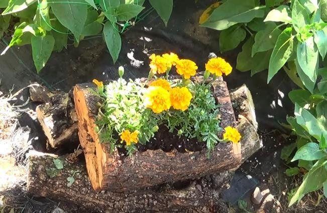 Cómo hacer una jardinera con un tronco de árbol y 10 ideas más - como hacer una jardinera