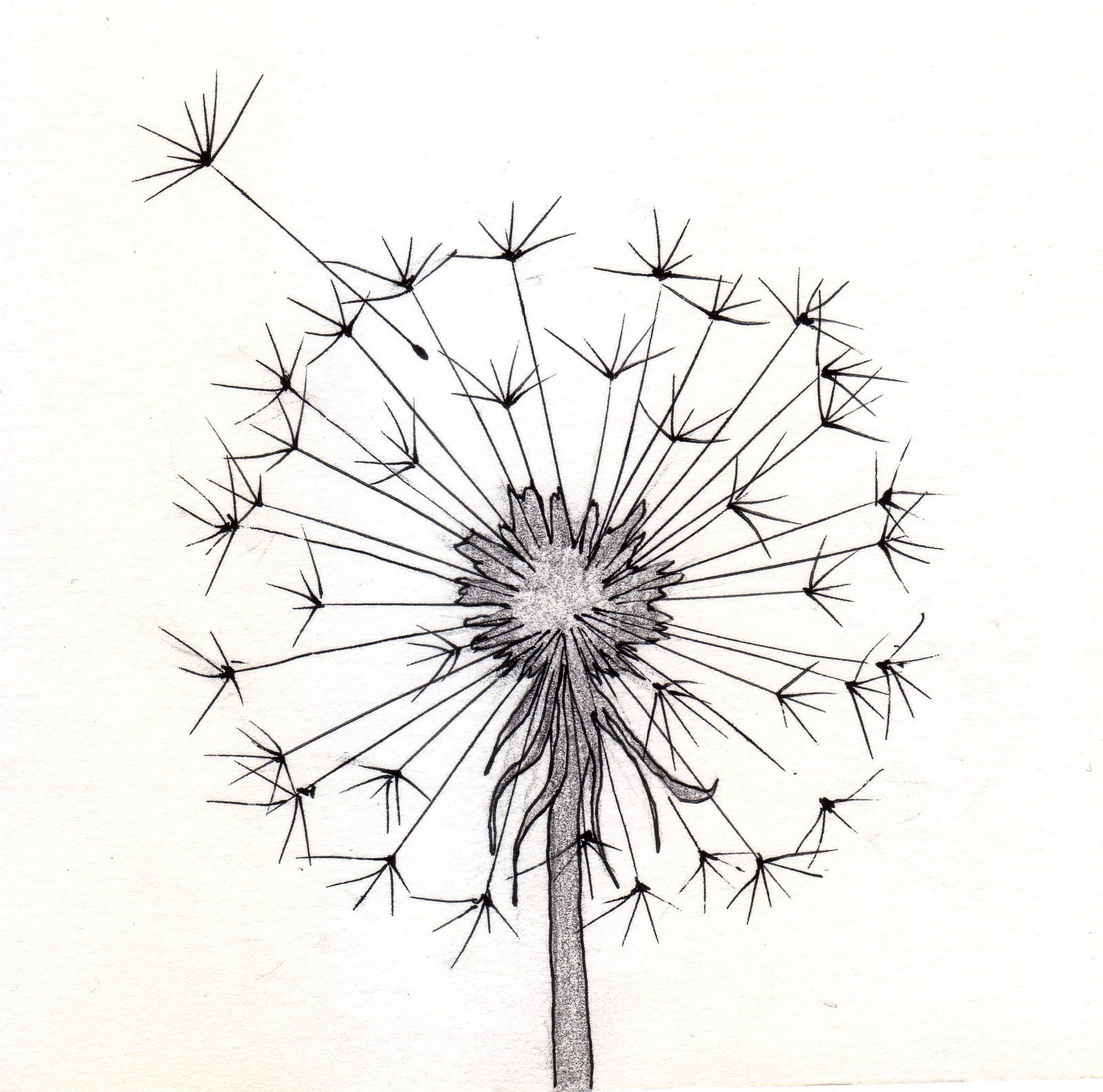 Dandelion sketch more maybe another tattoo day pinterest