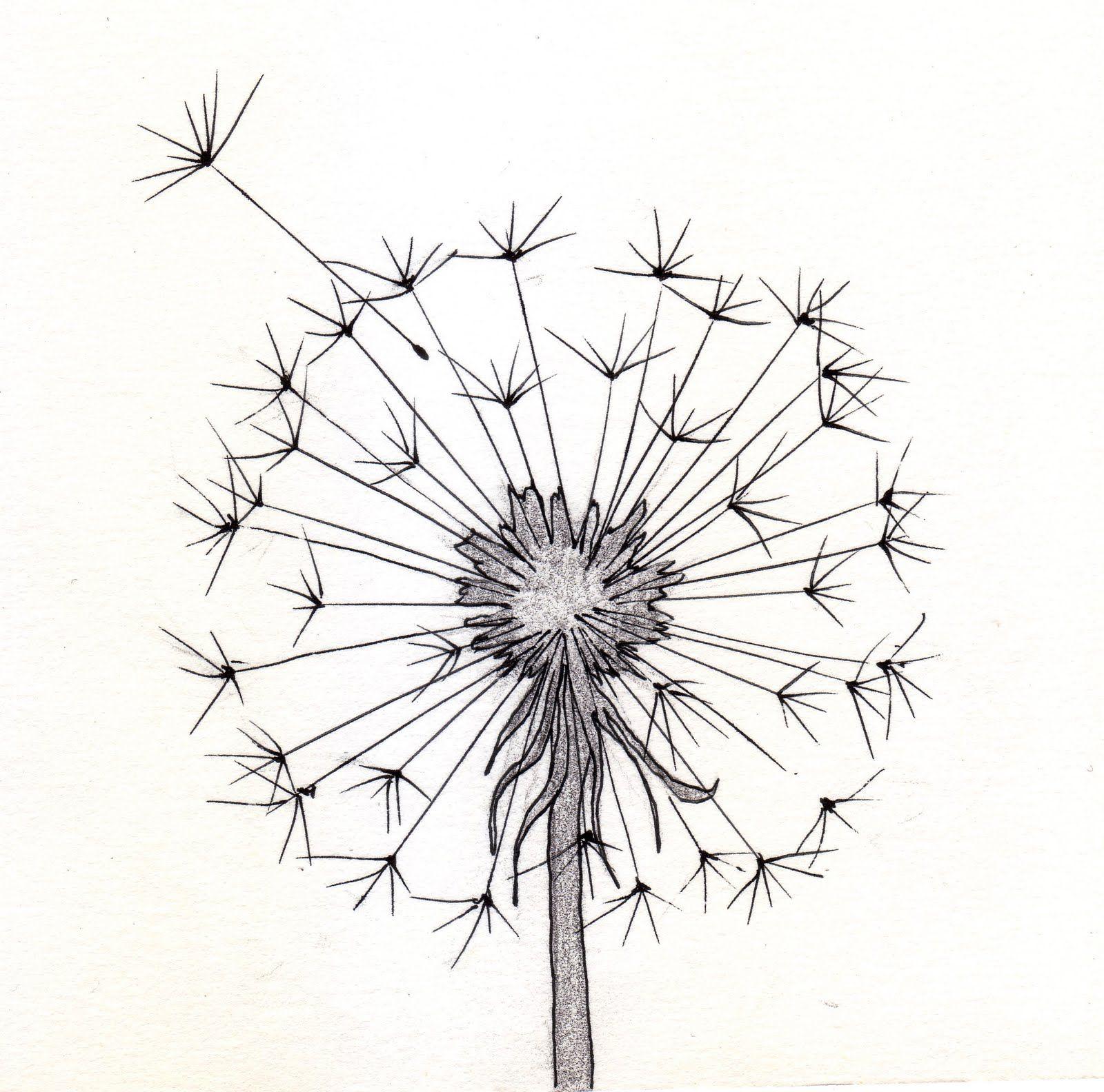 Dandelion Sketch