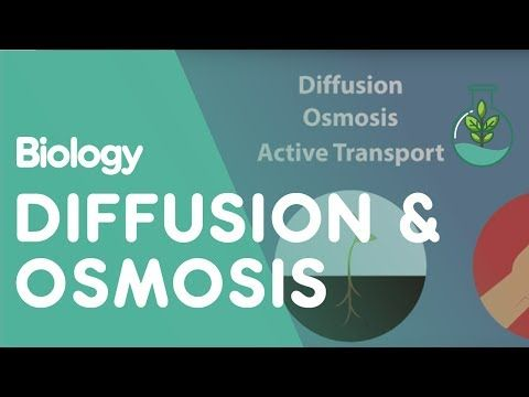 Transport in cells diffusion and osmosis biology for all transport in cells diffusion and osmosis biology for all fuseschool youtube fandeluxe Choice Image