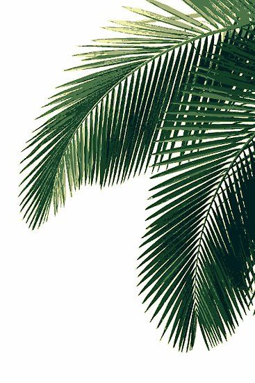 Tropical Palm Leaves Poster by MyArt23